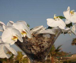 FlowersandstyleTableScape8
