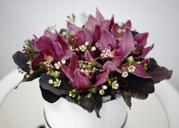 box_orchid